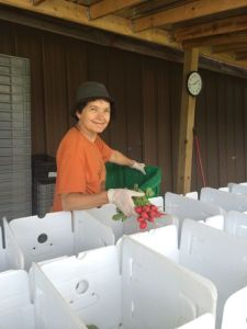 Debbie packing CSA boxes