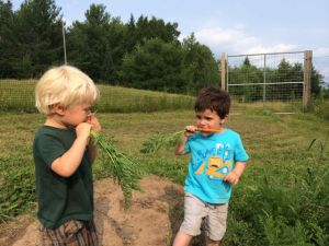 The boys enjoying a nice chat over their carrots.