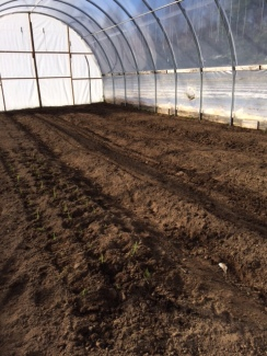 Greenhouse all Seeded
